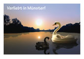 Swan postcard (sunset)